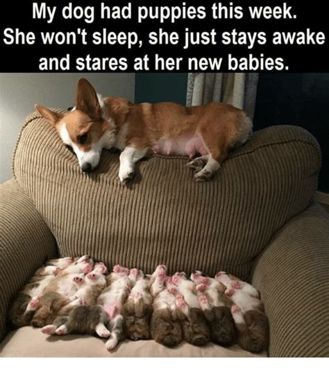 my just had puppies my had puppies this week she won t sleep she just stays awake and stares at