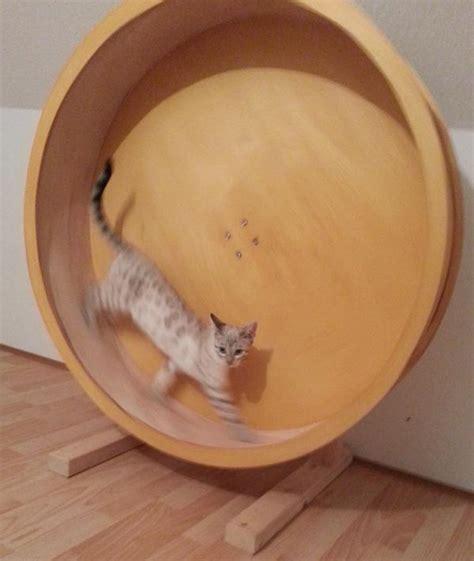 wo kann hã ngematten kaufen catwheel katzenlaufrad in biedesheim kaufen und