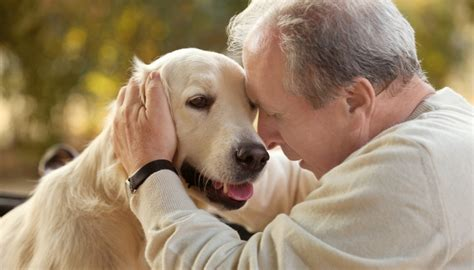 therapy dogs for depression science on therapy dogs for depression fact or fiction