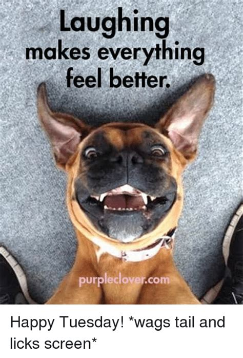 Happy Tuesday Meme - laughing makes everything feel better purpleclover com