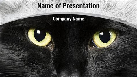 good cat eyes powerpoint template best agenda templates