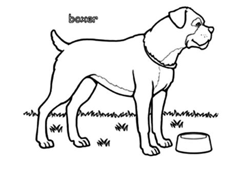 guard dog coloring page boxer dog coloring pages www imgkid com the image kid