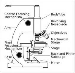 worksheets microscopes kayt