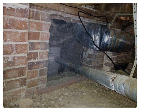 rodent control sydney pest control company sydney