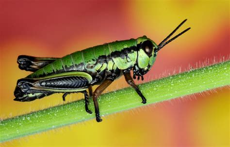 Amazing Beetles amazing insect photos insect photography insect pictures