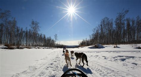fairbanks sledding alaska sunset dinner mushing tour