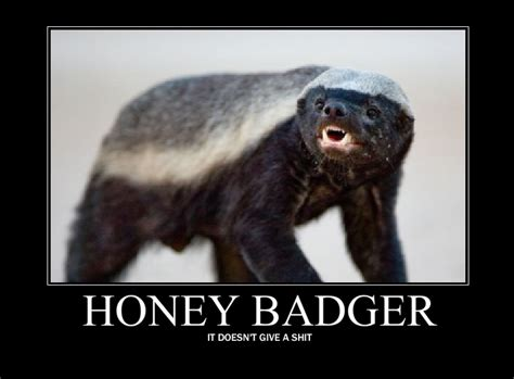 Meme Honey Badger - image 119156 honey badger know your meme