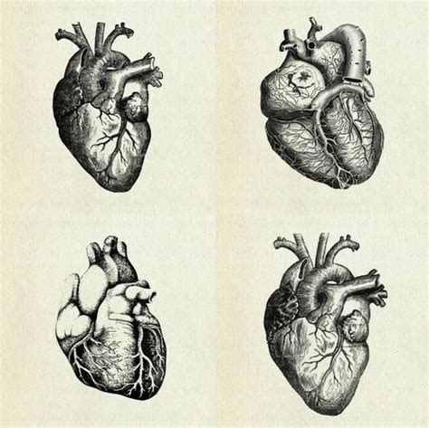 anatomically correct heart tattoo the vintage drawings and the o