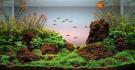 Aquascaping Shop by Die 25 Besten Ideen Zu Aquarium Einrichten Auf