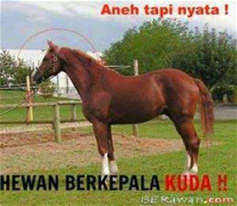 aneh tapi nyata hewan berkepala kuda ಌ berawan ಌ