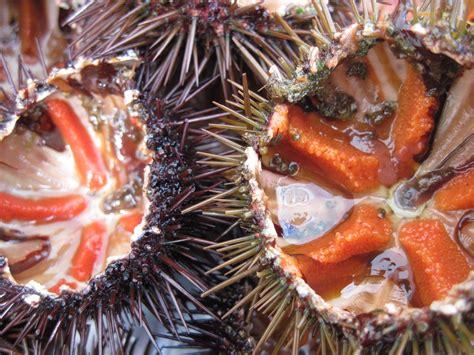 anemone food anemone food food