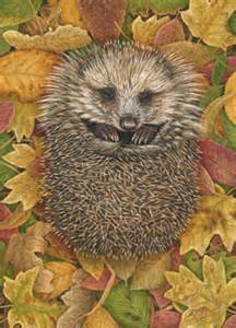 hedgehog in autumn leaves limited edition print by robert