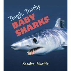 baby shark explained happy happy shark week mayo s musings