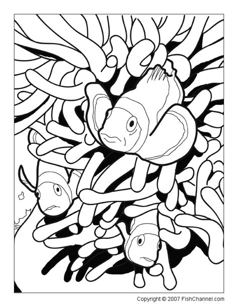 coloring page of a clown fish fish coloring pages to print for adults printable
