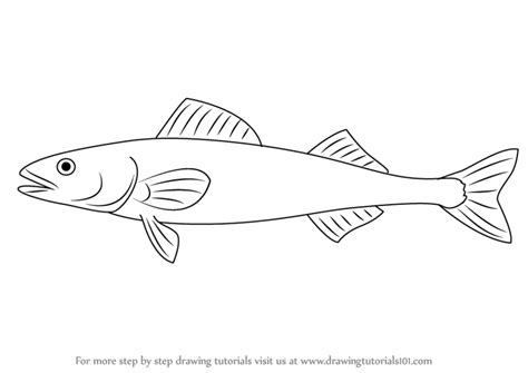 coloring pages of cod fish learn how to draw a sablefish fishes step by step