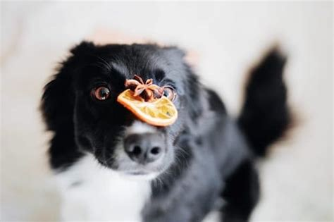 is cinnamon ok for dogs cinnamon and dogs is it bad for dogs to cinnamon