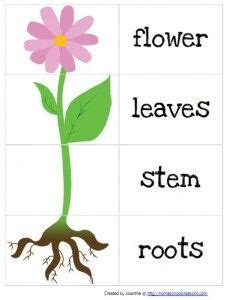 kindergarten activities on plants gardening preschool pack from homeschool creations