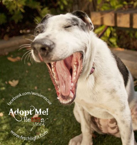 puppy adoption san diego pin by fetchlight pet photography on adoptable dogs san diego pinte