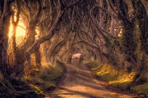 l mage du jour la route des vieux arbres en irlande