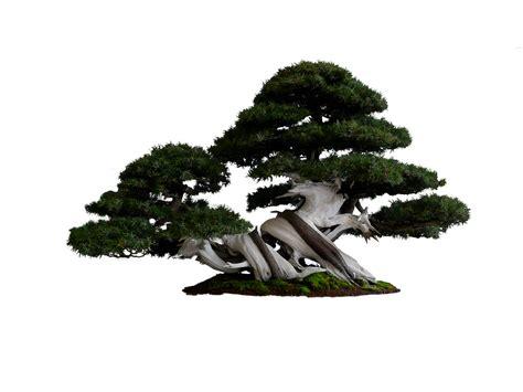 situs download gambar format png download gambar png pohon daun gratis deka productions