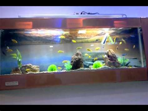 aquarium design in chennai aquarium outlet of aquarium design india in spencer plaza