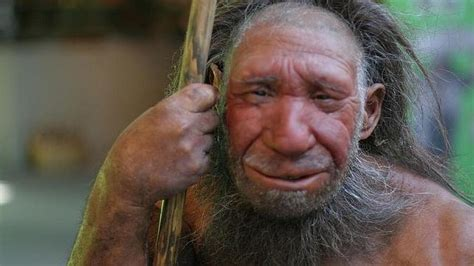 imagenes ojos desvelados actualiza tu imagen de los neandertales antroporama