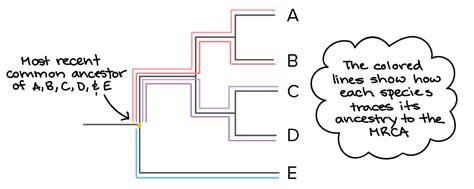 zener diode khan academy pn junction khan academy 28 images cell junctions cells khan academy calvin cycle worksheet