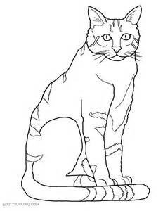 types of cat coloring cat coloring pages pint sized pumas on parade