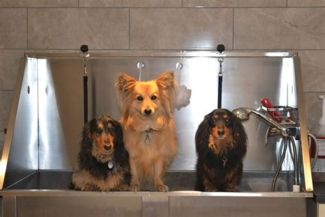 top dogs groom and bath house bath house grooming 28 images best 25 rooms ideas on laundry room room ideas and