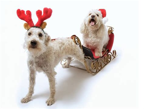 15 adorable christmas animal pictures simple life strategies
