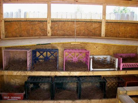 Superior Egg Crate Shelves #4: 35176_chicken-coop3.jpg