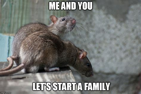 Rodent Meme - why are rats the most preferred animals for experiments