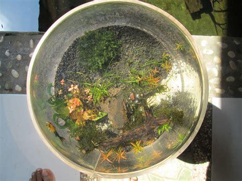 aquaplantarium tips  membuat nano aquascape