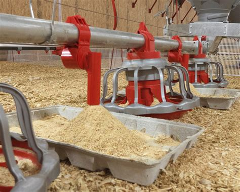 Chore Time Feeders e z start 174 feeder feeders feeding systems broilers chore time