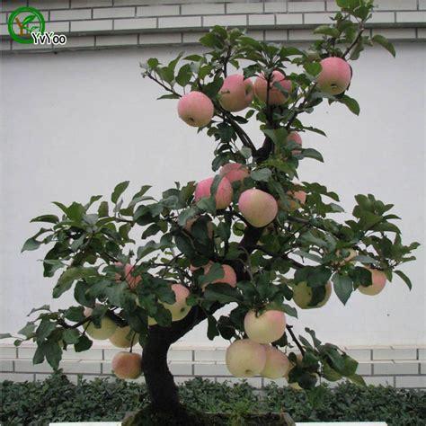 fruit trees wholesale buy wholesale apple fruit tree from china apple