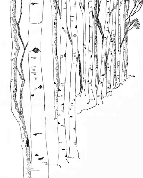 birch tree coloring page black and white birch tree graphic lucky palm graphics