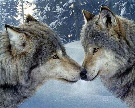 wolf s wolves johnwhye