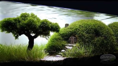 aquascape style bonsai aquascape youtube