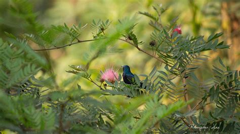 garten vögel die 50 besten blumen und schmetterlinge hintergrundbilder