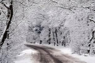 Photo gallery of 171 snow 187