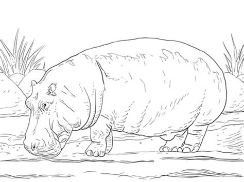 christmas hippo coloring page hippopotamus amphibius coloring page supercoloring com