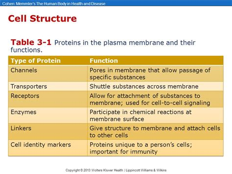 3 proteins and their functions chapter 3 cells and their functions ppt