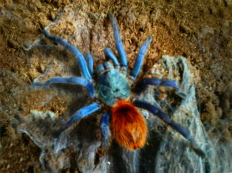 colorful tarantulas 301 moved permanently