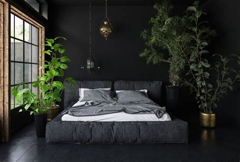 houseplant for dark room 15 soothing bedroom plants to help you sleep earth911 com