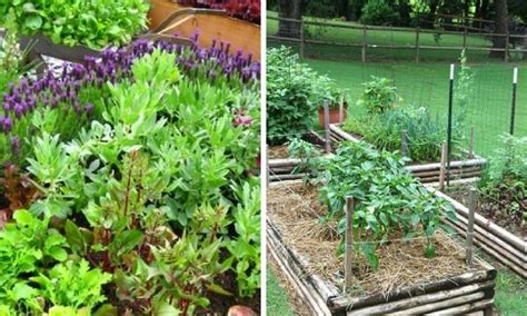 10 Tips To Starting A Vegetable Garden For Beginners Starting A Vegetable Garden For Beginners