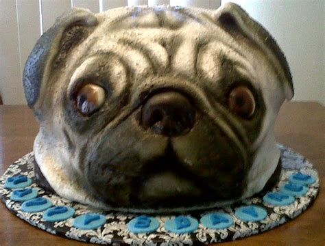 birthday cake pug pin pug with birthday cakestoryviewjpg cake on