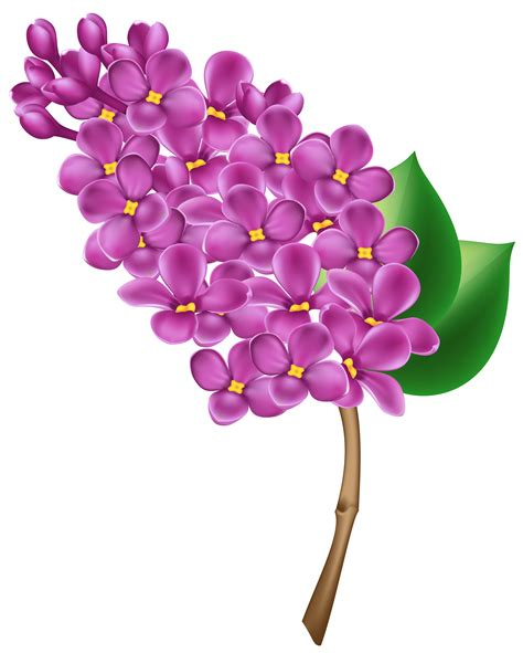 flower clip free lilac clip cliparts