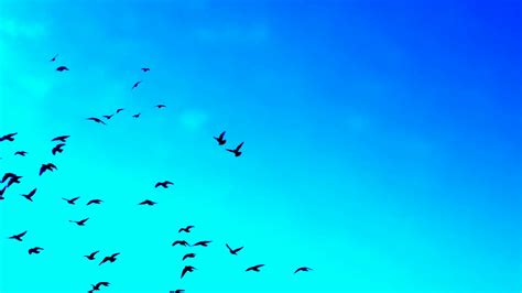 bird background birds flying miracle background stock footage