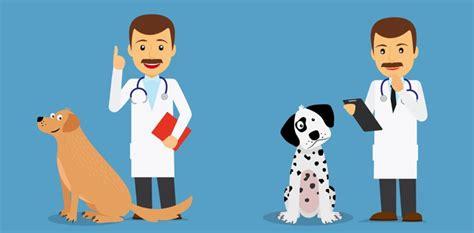imagenes de medicas veterinarias d 243 nde estudiar medicina veterinaria
