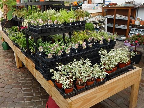 miniature plants for sale 100 miniature plants for sale for more information